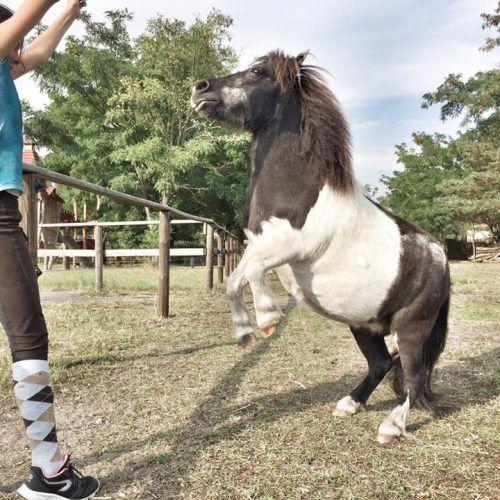 Pferdekultur Gut Hobrechtsfelde